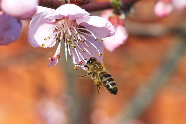 Pčelari pred dobrom sezonom meda, strahuju od prskanja