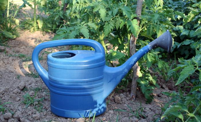 Kako i koliko zalivati povrće tokom proleća i leta?