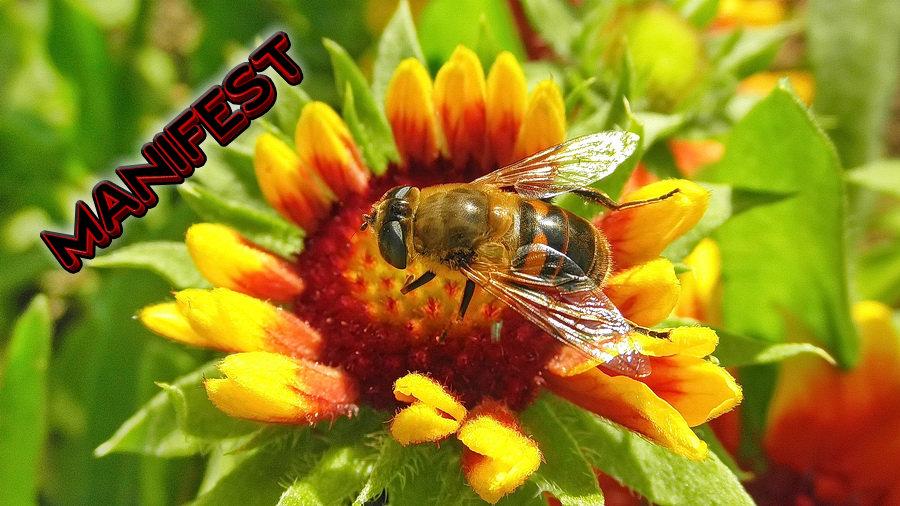 MANIFEST – Alrmantna situacija kod pčelara