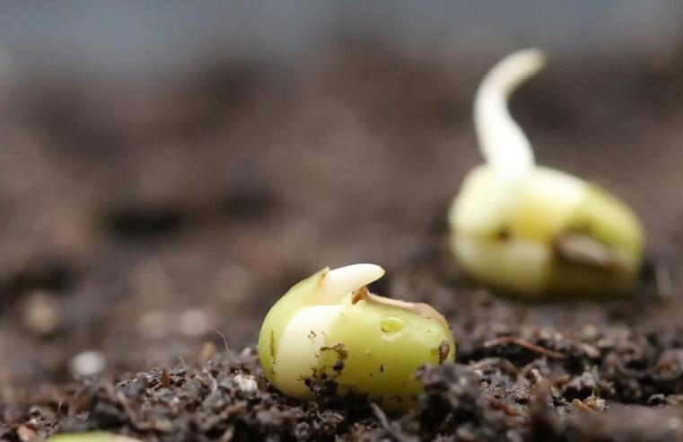 Broj dana klijanja semena povrća na odredjenim temepraturama