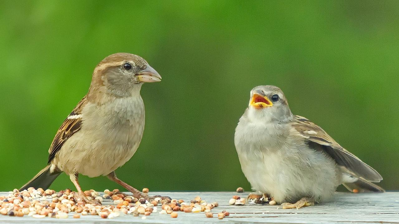 Ptice nestaju nešto se čudno dešava sa pticama