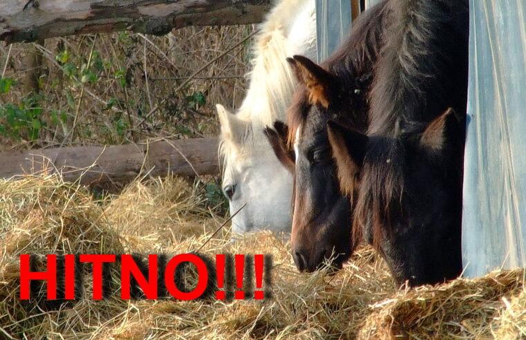 "Azil za konje ""Staro Brdo"" – Horse sanctuary ""Old Hill"""