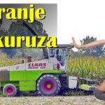 Siliranje kukuruza u Crnoj Bari